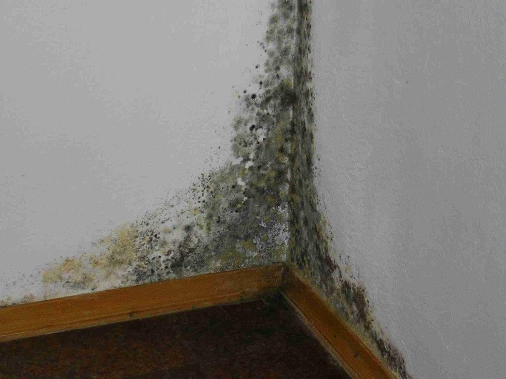 Плесень на стенах: как навсегда избавиться от неё