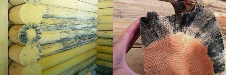 Обработка древесины от грибка и плесени: средства, методы