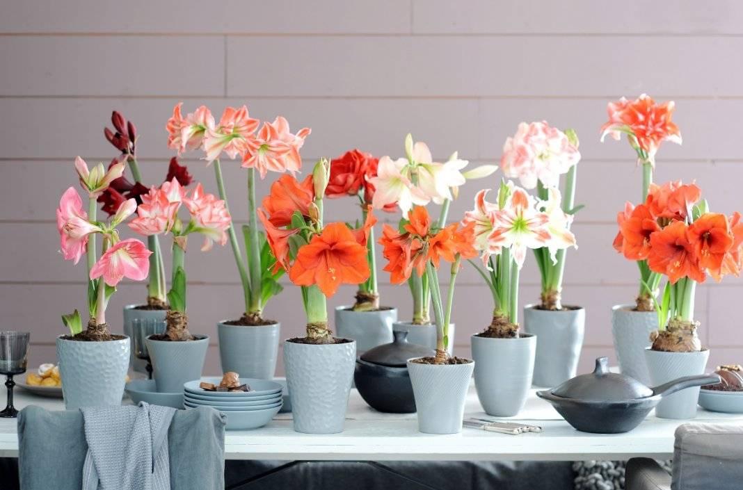 Садовые цветы, которые цветут все лето - фото с названиями (каталог)