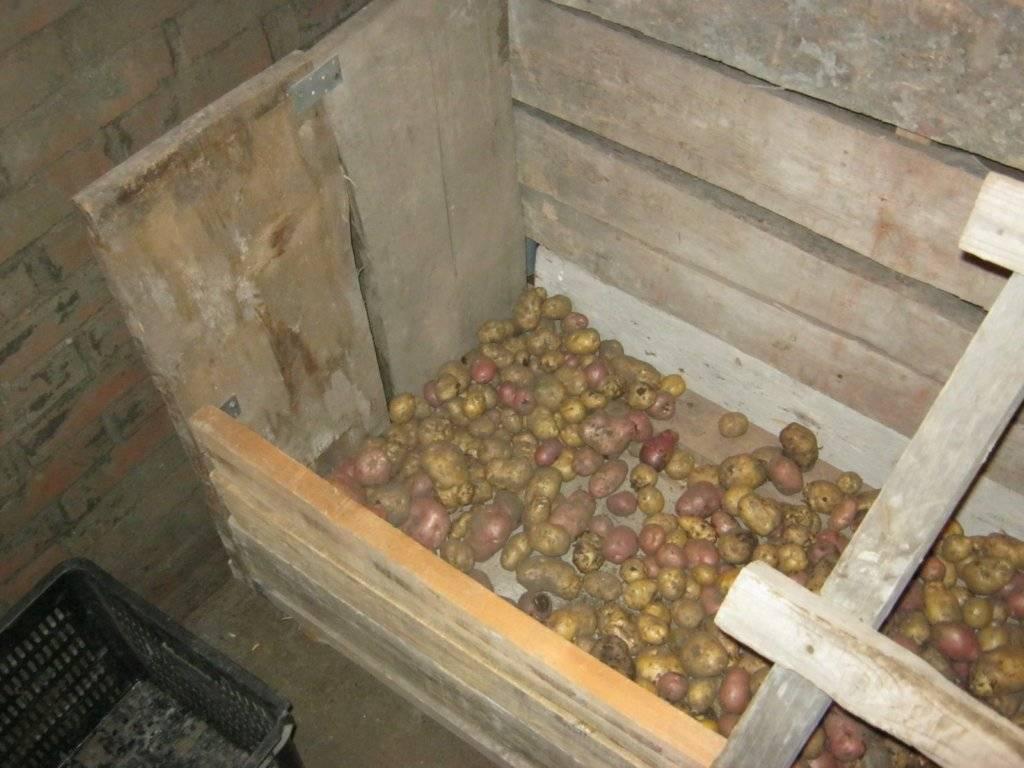 Как сделать яму для картошки: пошаговое руководство
