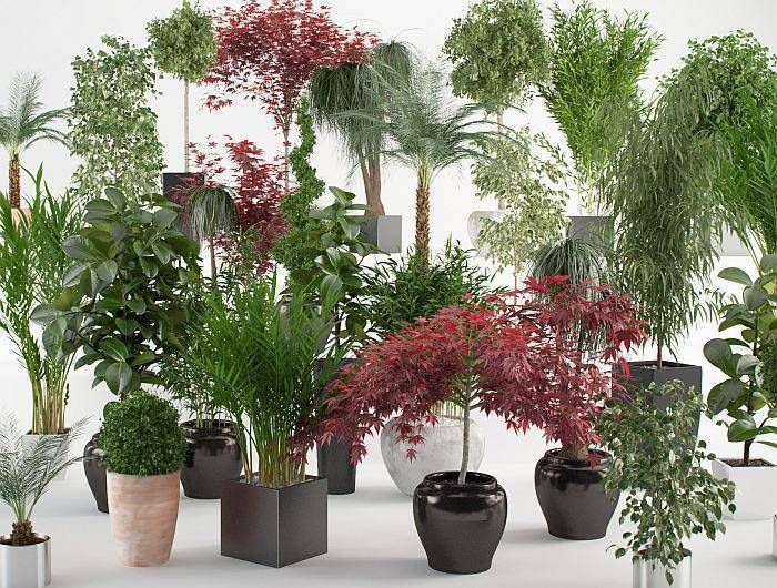 Растения в интерьере: правила выбора, модные тенденции и идеи оформления дома