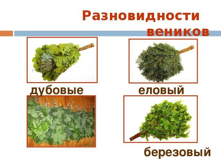 Веники еловые [для бани]: особенности изготовления и использования