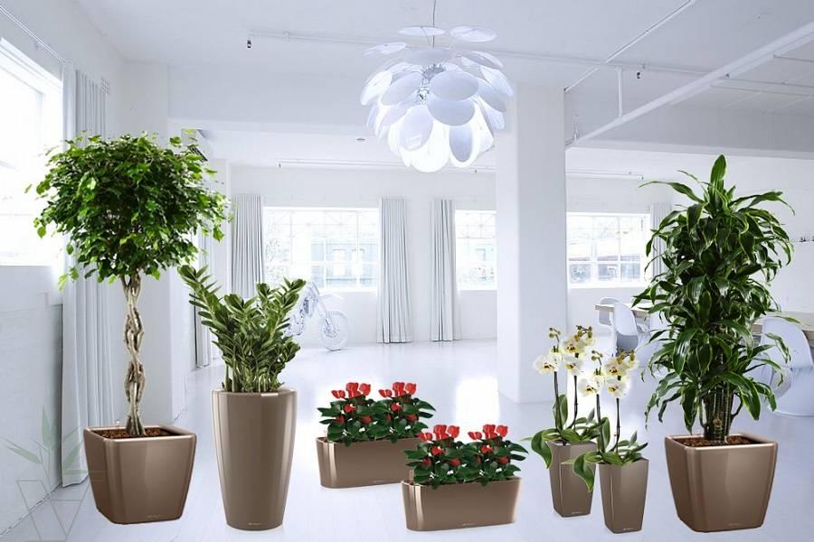 Лучшие цветы для дома: описание, названия и фото