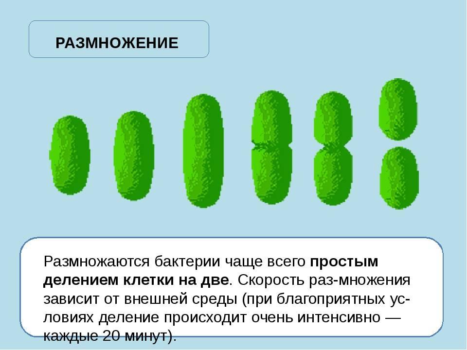 Где в доме живут микробы и как с ними бороться? - hi-news.ru