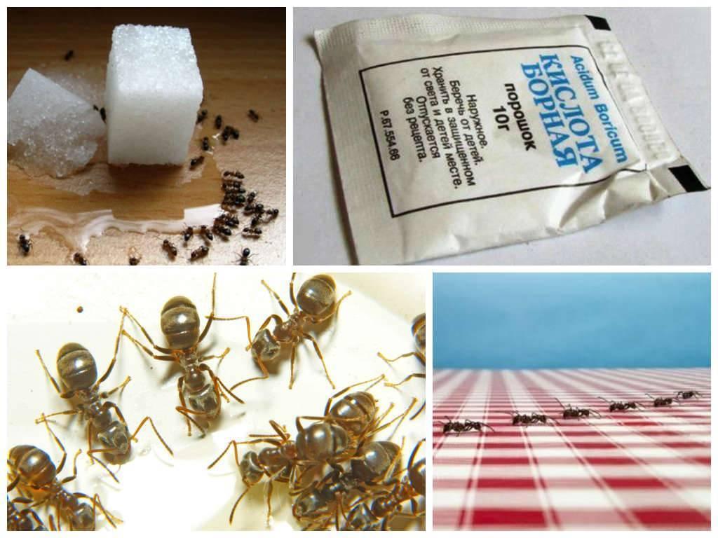 Как избавиться от муравьев в деревянной бане — лучшие методики