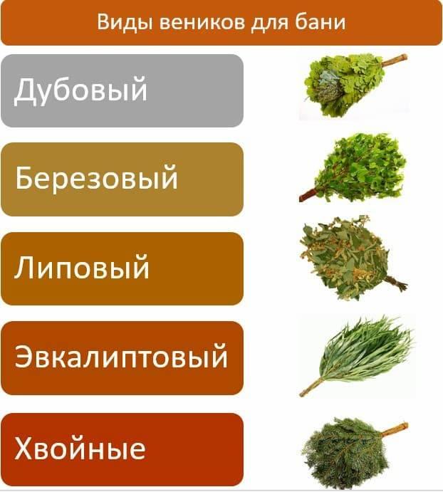 Банные веники: какие бывают, как правильно выбрать? польза и эффективность для бани березового, эвкалиптового, липового, ольхового, травяного, бамбукового, дубового, хвойного, кленового, травяного, из плодовых деревьев и кустарников: описание