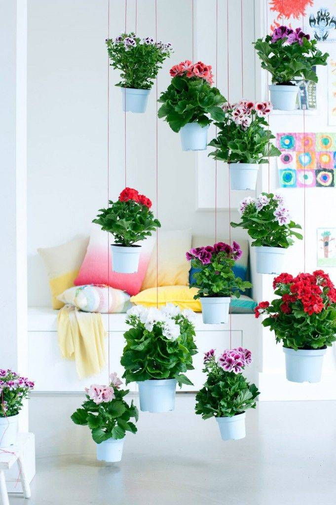 Комнатные цветы: фото и названия (каталог)