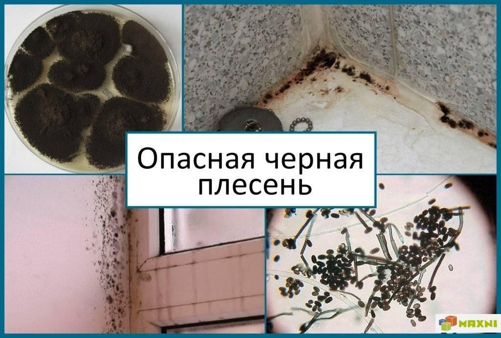 Грибок на бетоне: эффективные средства борьбы