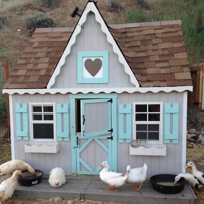 Самодельные домики для уток: фото удачных