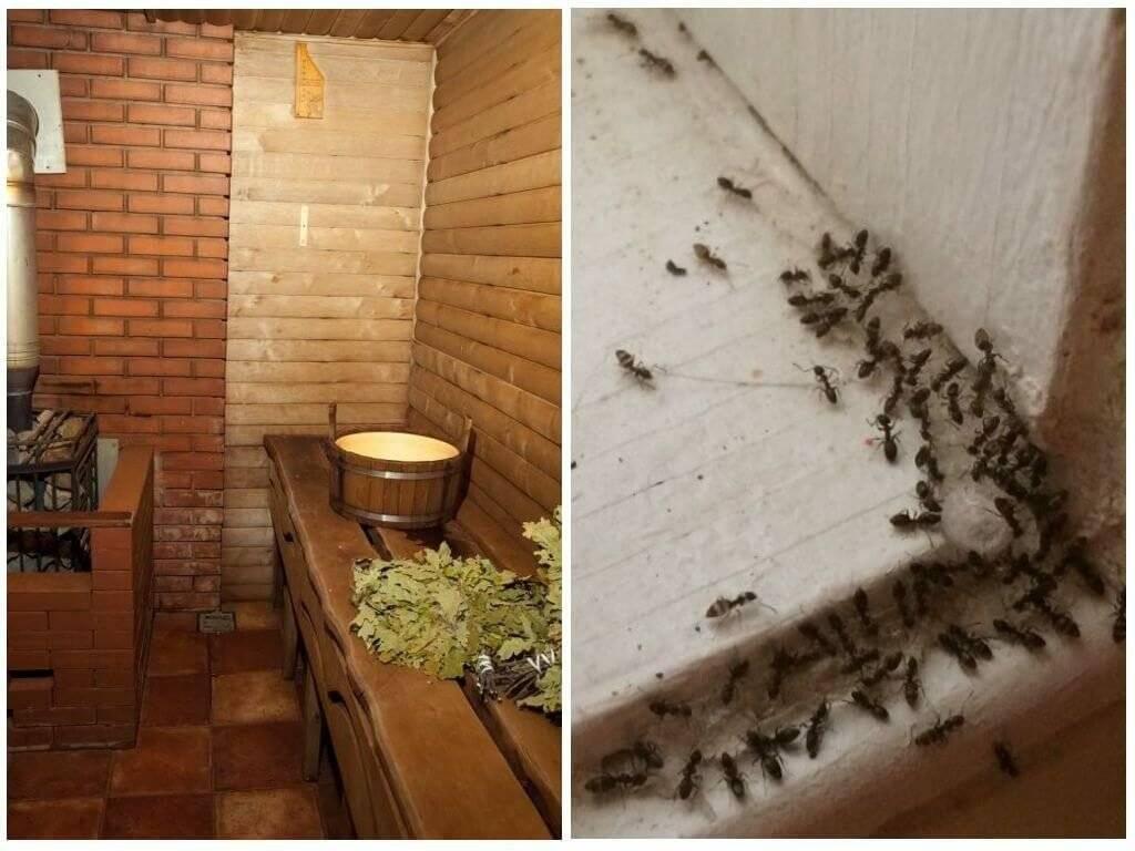 Муравьи в бане: как от них избавиться народными и химическими средствами