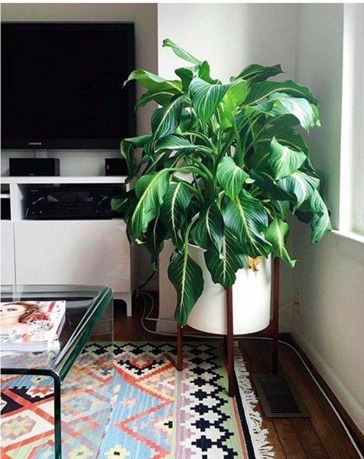 10 комнатных растений, которым комфортно в тени