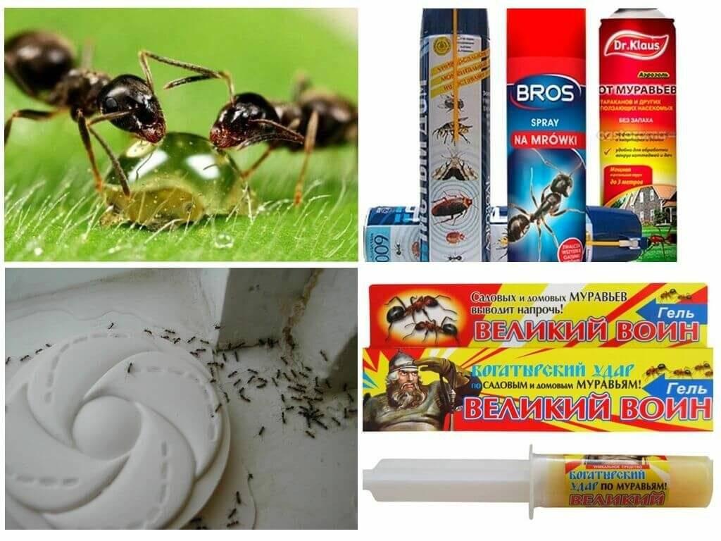 Выводим муравьев из бани народными и другими средствами. как избавиться от муравьев в бане? народные и химические способы