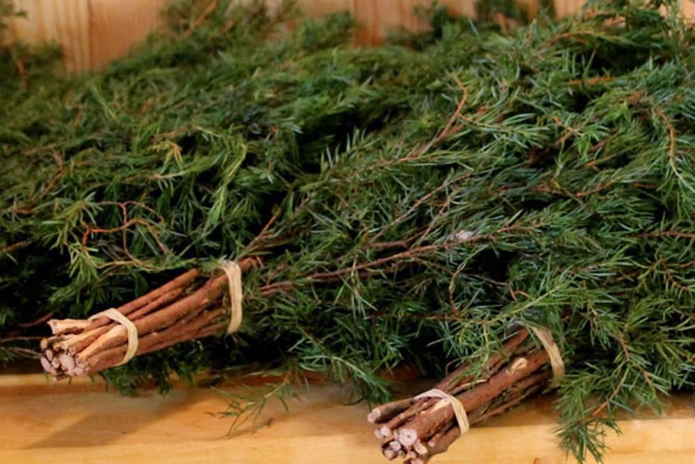 Пихтовые веники для бани: польза заготовка
