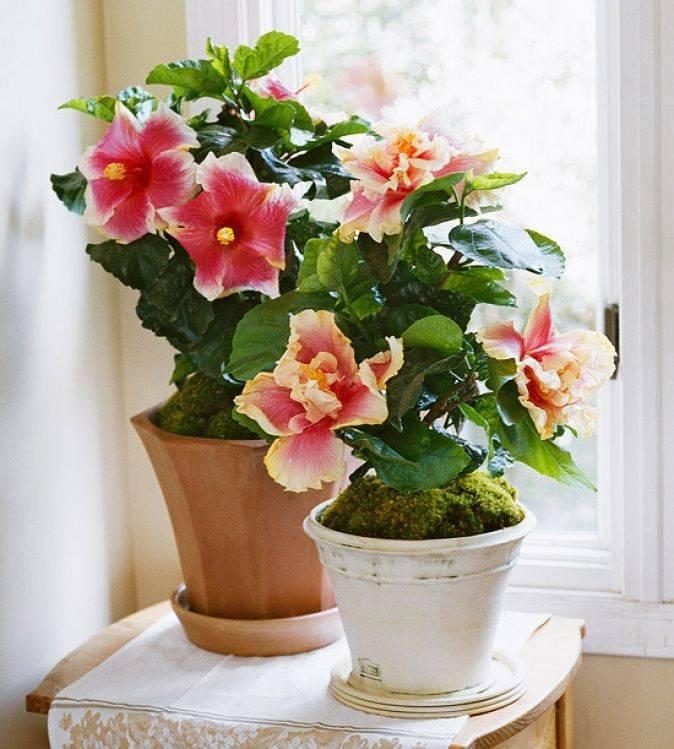 Самые красивые и популярные домашние растения в 2020 году