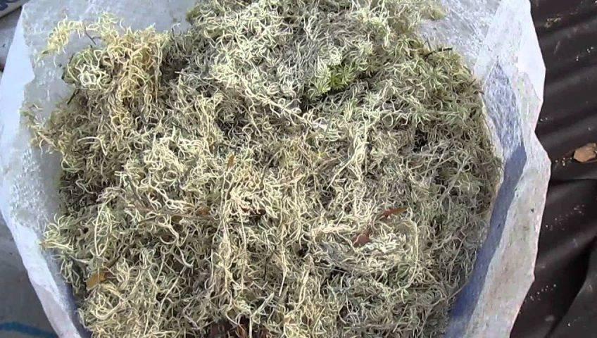 Сборка сруба на мох: почему мох считается лучше