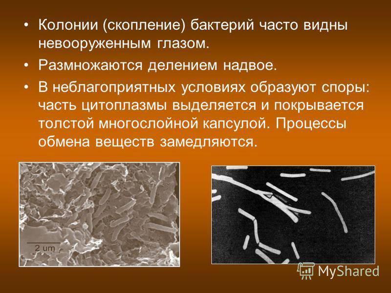 Типичные места обитания микробов: топ самых грязных предметов в доме