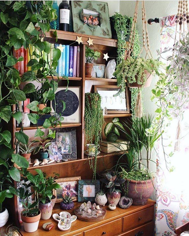 Комнатные растения: как оформить интерьер цветами и растениями (38 фото)