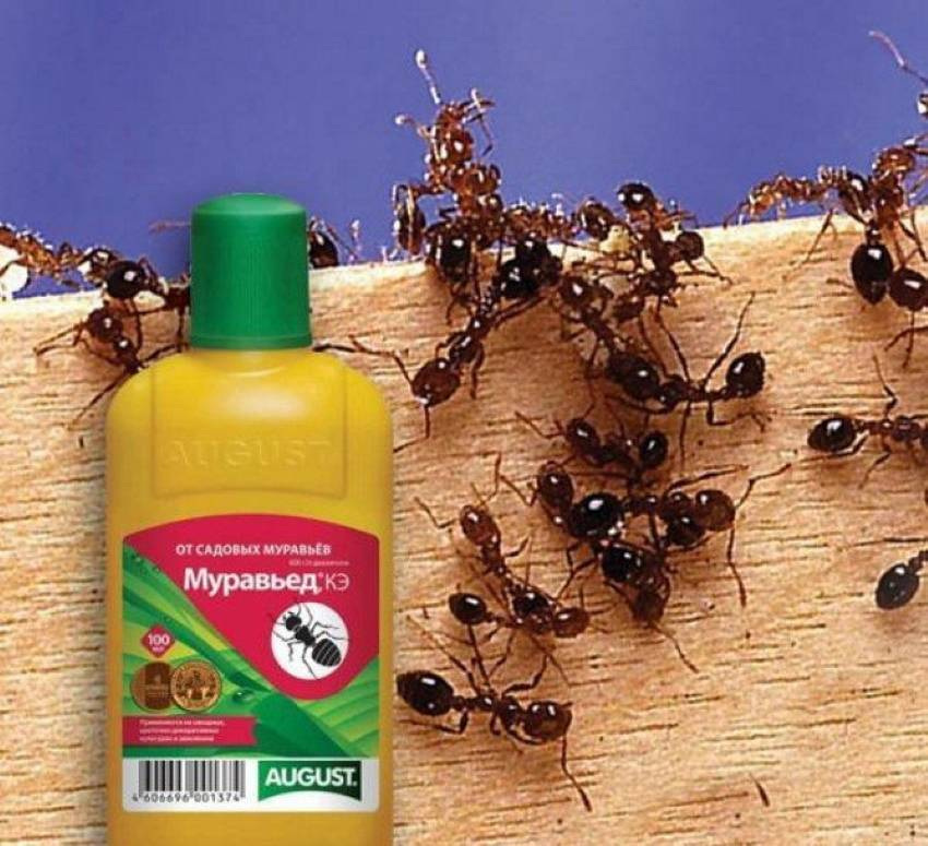 Как избавиться от муравьев в огороде навсегда