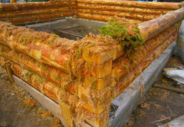 Межвенцовый уплотнитель - мох сфагнум