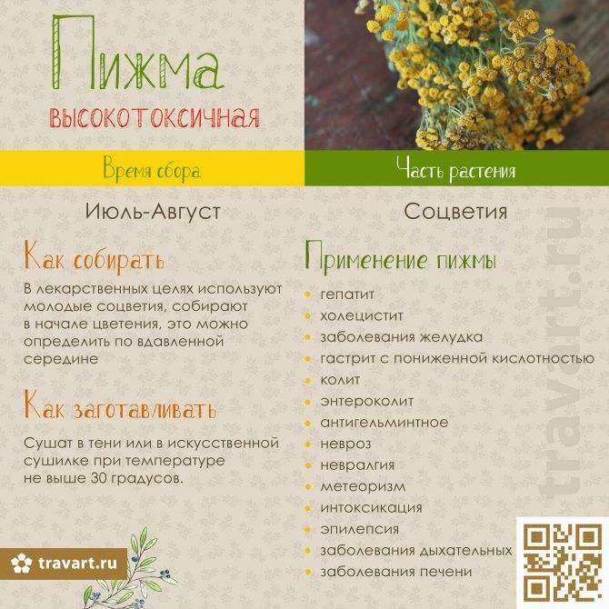 Пижма лечебные свойства и народные рецепты