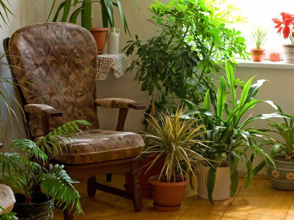 8 растений, которые украсят собой темный угол в квартире