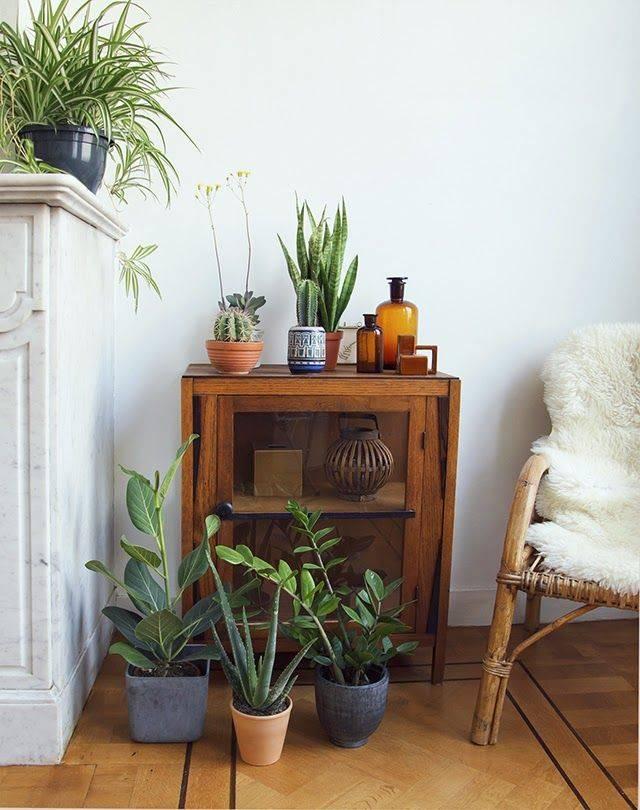 5 ролей комнатных растений в интерьере — ботаничка.ru
