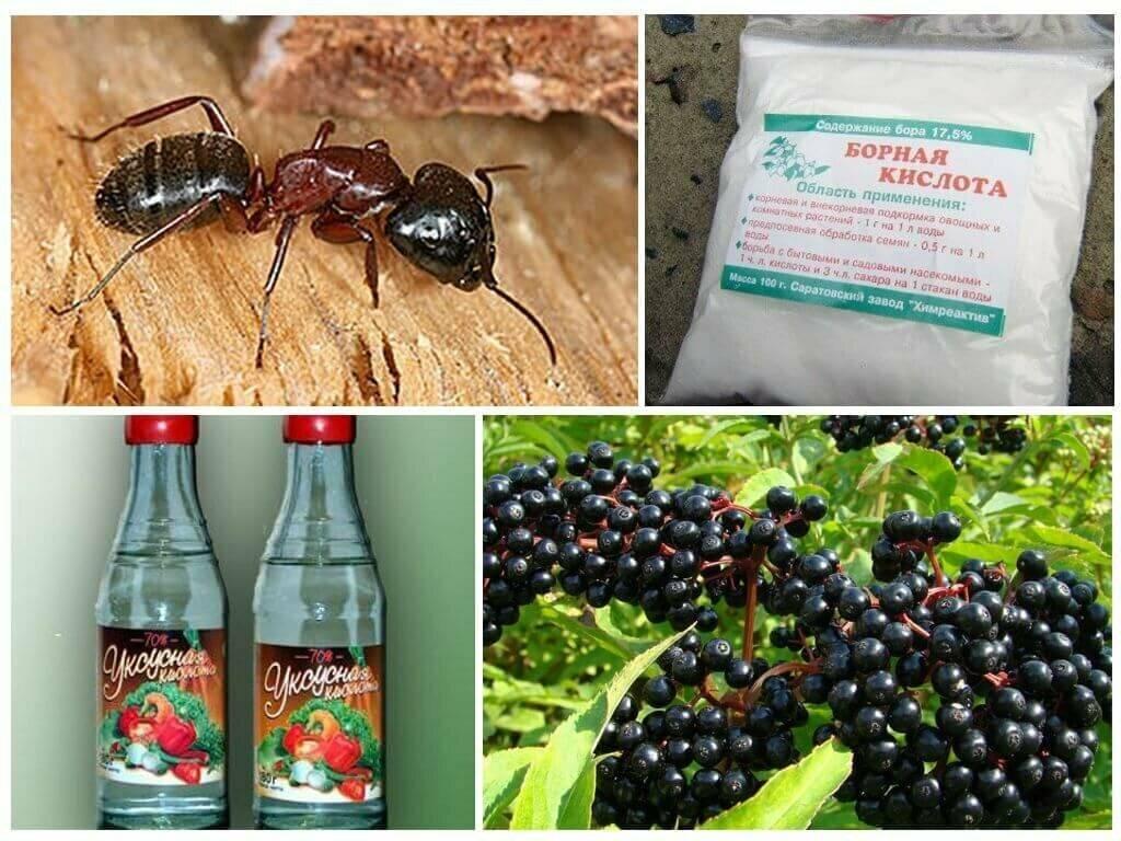 Как избавиться от муравьев в бане - больших, маленьких, черных, народные и специальные средства