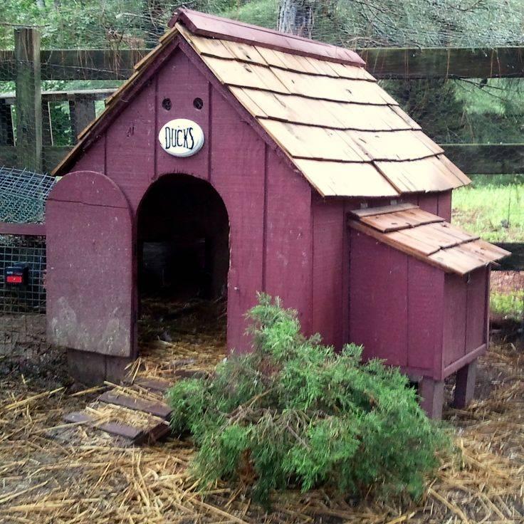 Утятник - помещение для уток своими руками, устройство | домашняя ферма