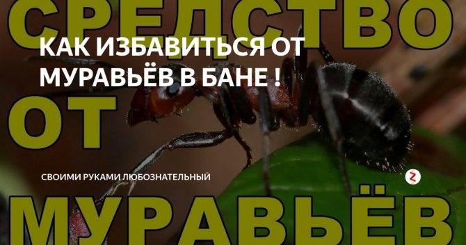 Как избавиться от муравьев в бане