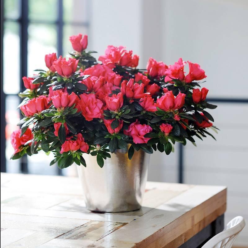 Самые полезные комнатные растения для дома