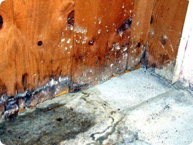Как избавиться от грибка в подвале деревянного дома раз и навсегда