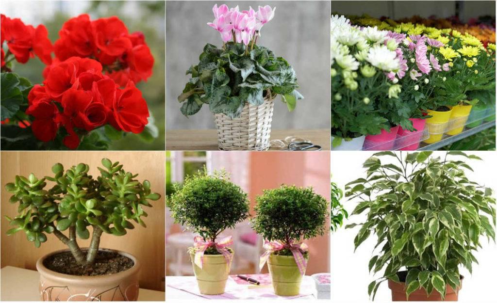 Топ-35 самых необычных растений мира (фото & видео) +отзывы