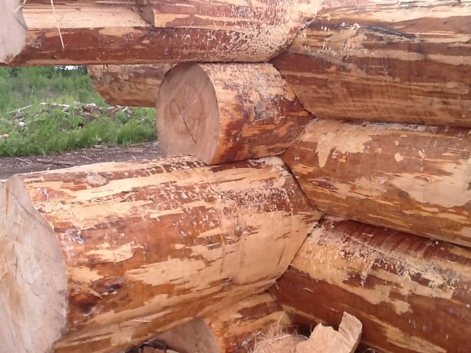 Из какого дерева лучше строить баню: критерии выбора
