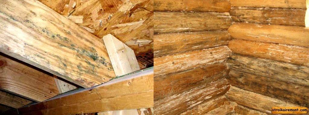 Чем убрать плесень на стенах: 7 средств дезинфекции