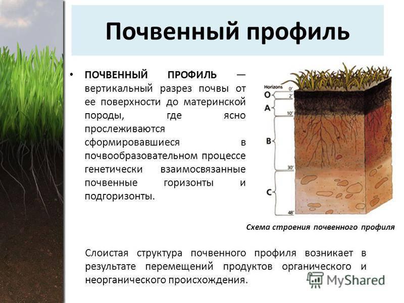 Типы почв и их особенности