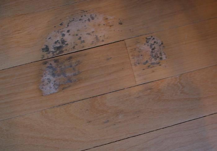 Белая плесень в подвале и черный грибок в подполье: как вывести навсегда?