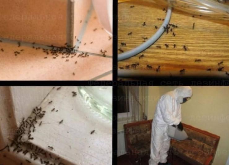 Как быстро вывести муравьев из бани: химические средства и народные способы