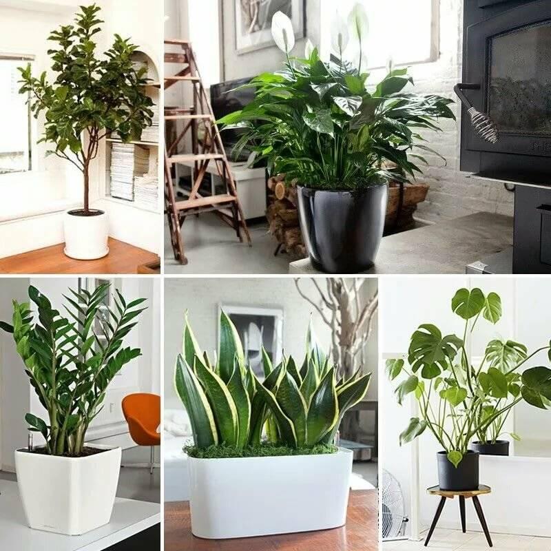 Теневыносливые комнатные растения: названия и фото