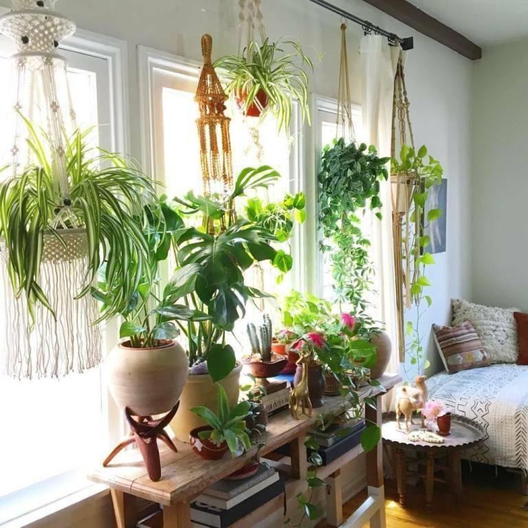 Растения в интерьере жилого дома (86 фото): комнатные цветы в красивых вазах, декор из искусственных растений