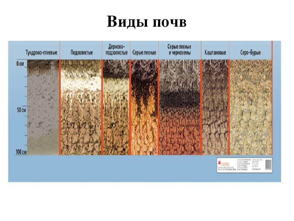 Особенности построения фундамента на различных типах почв
