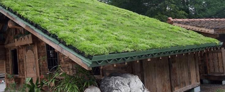 Зеленая крыша - технология строительства и варианты обустройства