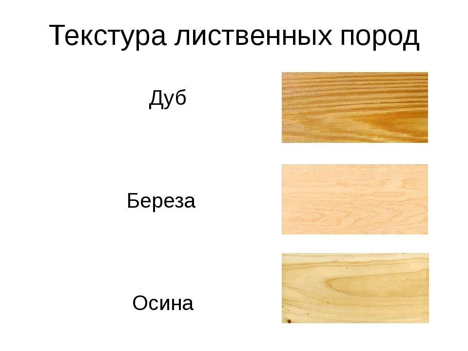 Что лучше осина или липа для бани?