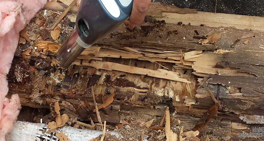 Как избавиться от муравьев в бревенчатой бане