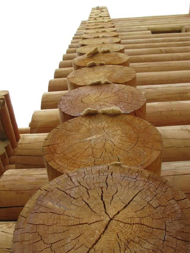 Из какого дерева лучше строить баню: сосна, липа, ель, дуб, осина плюсы и минусы