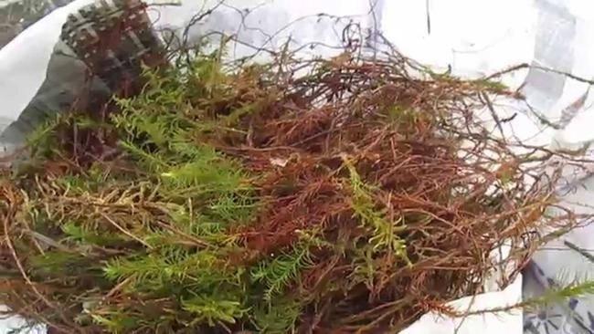 Межвенцовый утеплитель для бруса и бревна: виды, какой выбрать, технология утепления