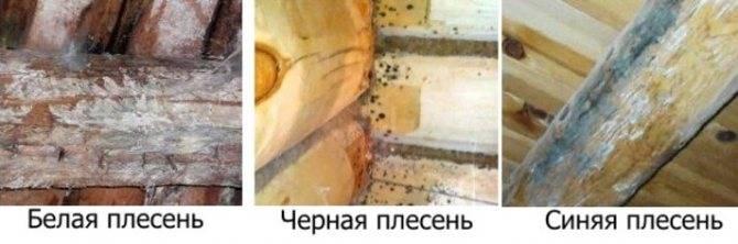 Грибок и плесень под деревянным полом: причины появления и методы уничтожения