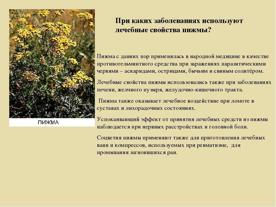Пижма: от каких болезней, от чего помогает, применение в народной медицине, как принимать от паразитов, сколько дней пьют, фото травы, цветков