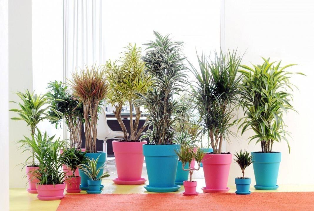 26 самых полезных комнатных растений для дома