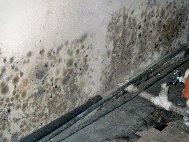 Грибок в подполье деревянного дома – избавляемся  раз и навсегда