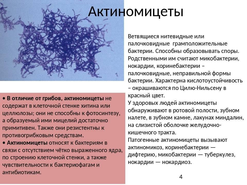 Микроорганизмы канализационных систем